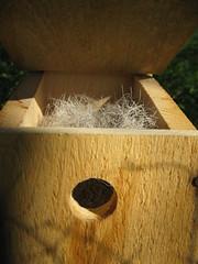 Bumblebee Nest?