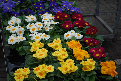 Spring flowers, the market on the square, Eslöv