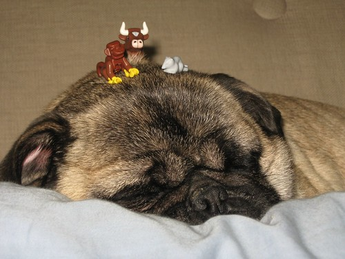 Sleeping pug with LEGO animals on his head