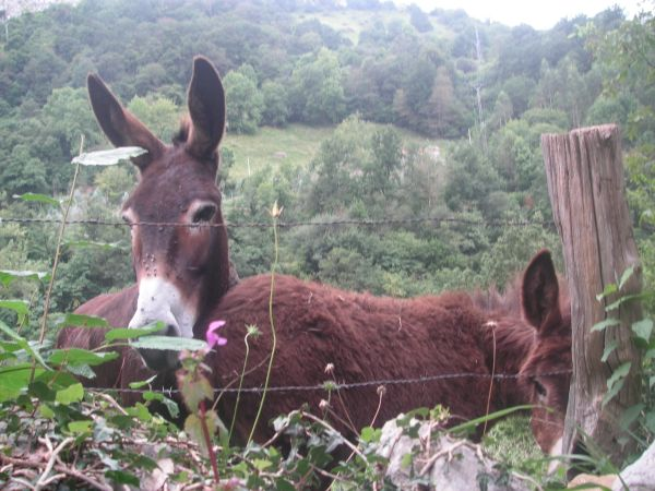 Fauna autóctona en el PR S-24 Picos de Busampiro