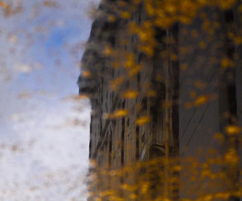Muddle Puddle Reflection