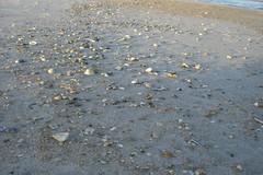Sea Shells at the Atlantic Ocean
