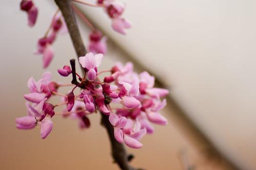 02.13.2009: spring (by bookgrl)