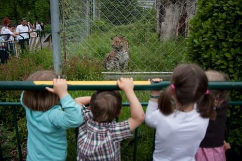 08/05/2009 : Le zoo