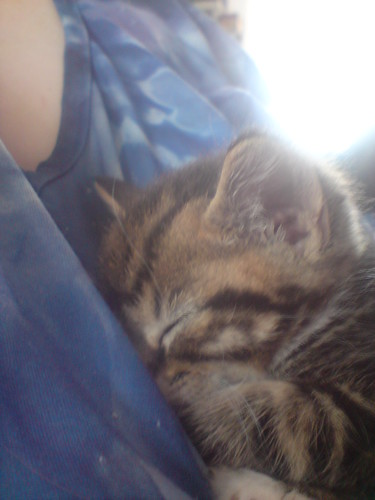 un-named kitten snuggles