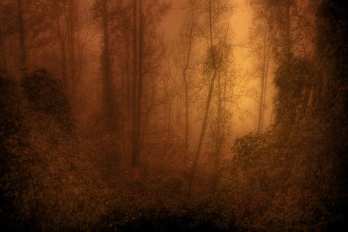 Misty Wood of Twilight