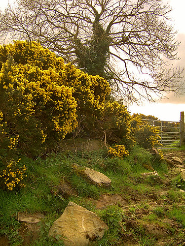 Witches Cove - Hidden beneath the gorse