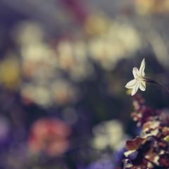 """Gratitude unlocks the fullness of life..."