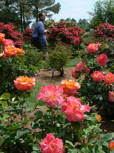 Norfolk Botanical Gardens - Ryan Walks Amoung Roses