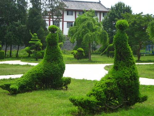 china park trip school trees grass garden children lawn henan zhengzhou