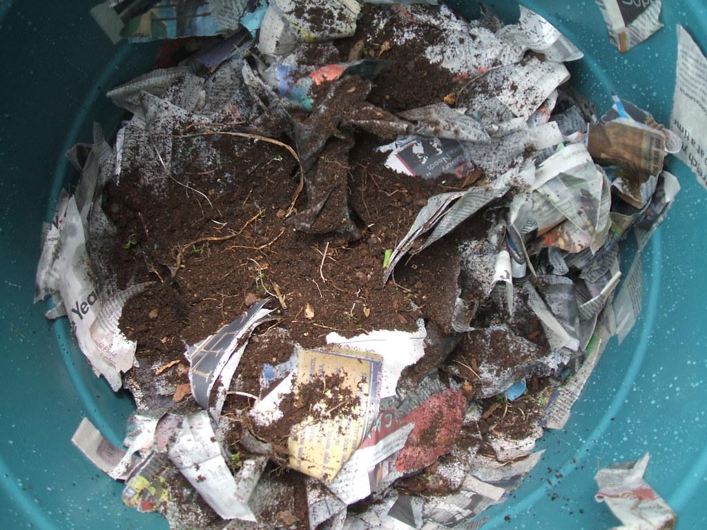 Handful of soil + water + shredded newspapers = worm bin bedding!