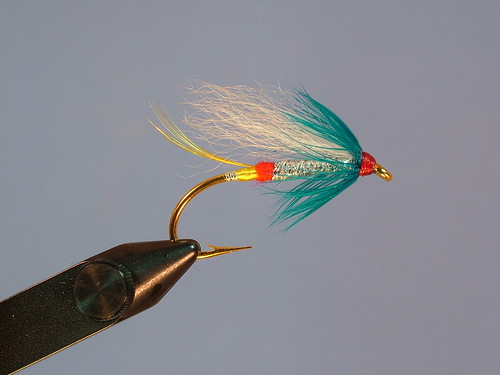 Nova Scotia Fly