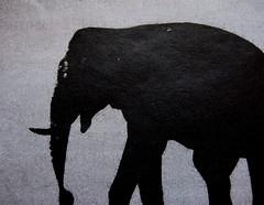 José Saramago, Il viaggio dell'elefante, Einaudi 2009 ©laRepubblica, 2.04.2009, p. 39 (part.)