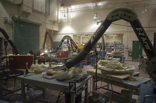 The palaentology laboratory within the Royal Tyrrell Museum