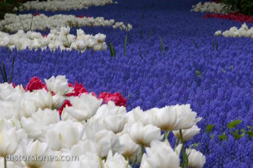 Río de flores en el Keukenhof