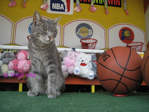 Target, the Coney Island Arcade Cat, is the Official Mascot of the flickr group Coney Island is Alive and Kicking and Welcomes Visitors in 2009! Today he was working the basketball game on the Bowery! He also had fun playing with the toggle on my camera.