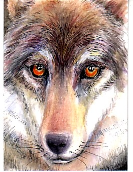ATC:  Wolf for Molossus (Traded)