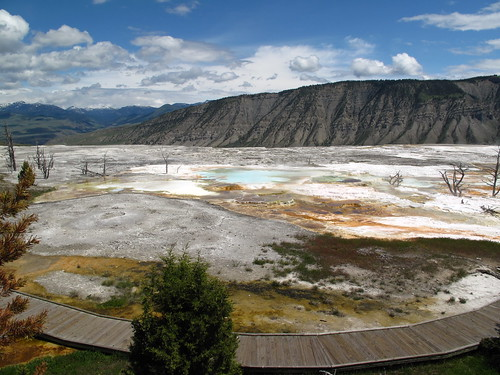 Mammoth Hot Springs, Yellowstone