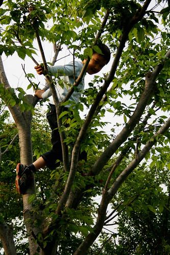 shota-kun climbs a tree in the yard