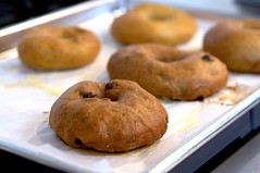 bagels, from the oven