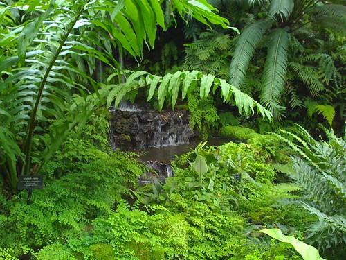 GPC fern room