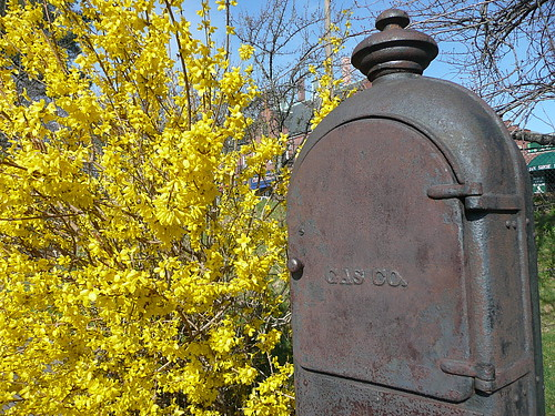 Forsythia with utility box