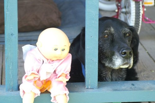 Look st Stasias cute old lab!  Shes since gone on to doggy heaven, but this cute little pic will live on forever.