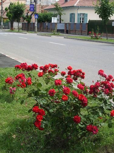 Romania 2007 (9) 013