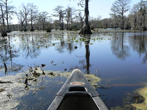 Merchant's Millpond Canoeing - Tip of Canoe