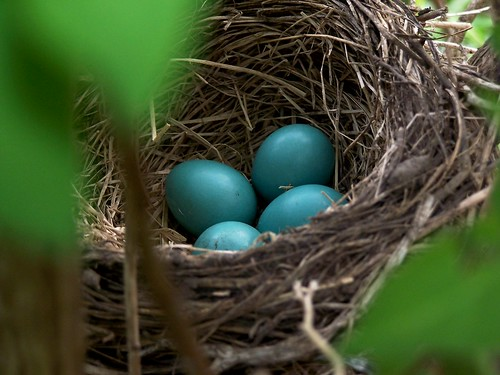 My First Robin Eggs by visiblejoy