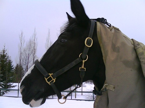 Handsome horse in a hood