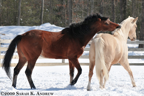 Horseplay in the Snow