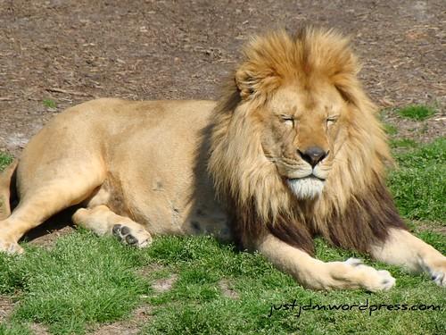 Gisselle's School Zoo Field Trip (36)