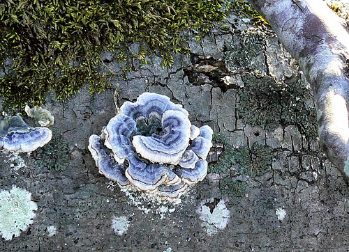 Inlet Drive - Lichen Rose (Cropped, Etc.)