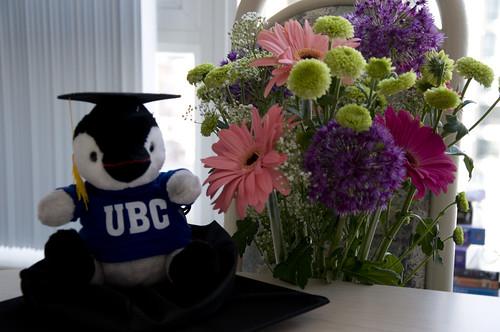 Pengi with UBC Sweatshirt