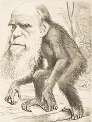 450px-Darwin_ape