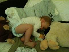 Napping Nolan