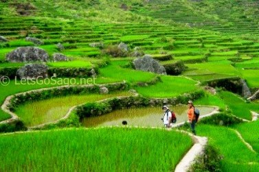 more of banga-an rice paddies
