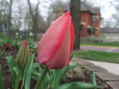 2009-04-28