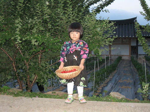 the grand daughter, picking cherries in the garden