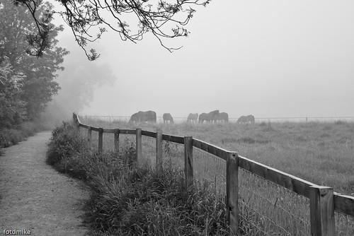 Horses in the mist P1040188
