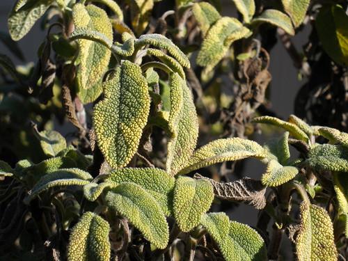 february-greenery