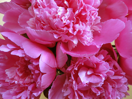 Blütenprachten