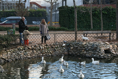Ducks in Parque Federico Garcia Lorca