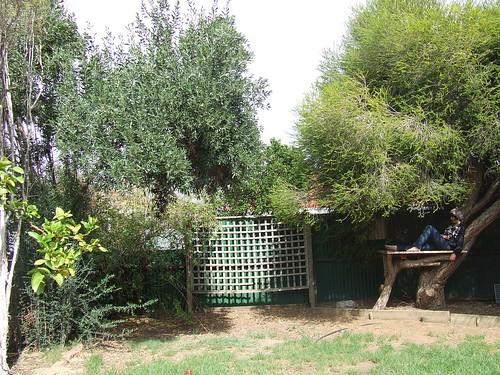 Backyard avec sister by you.