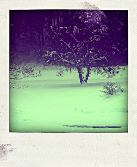 Ou sont les hivers d'antan?