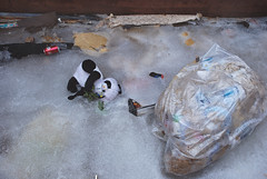 Frozen Stuffed Panda Bear - Salisbury Beach