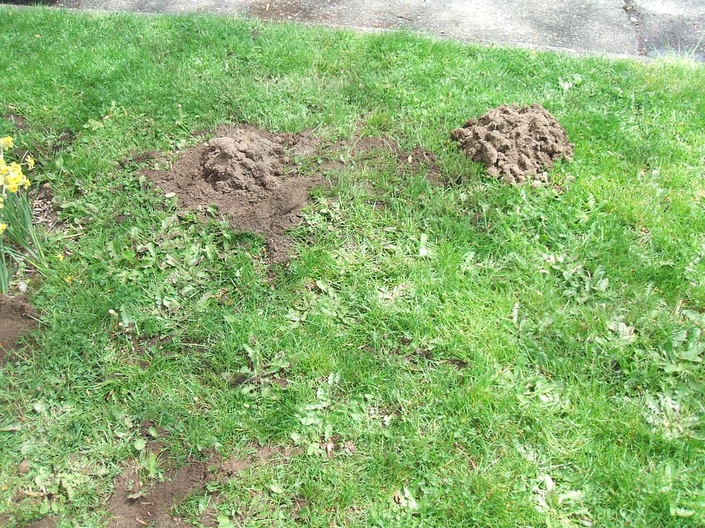 Molehills