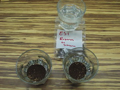 Esmeralda cupping at CCCNYCTC