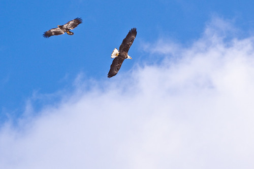 Michigan Eagles
